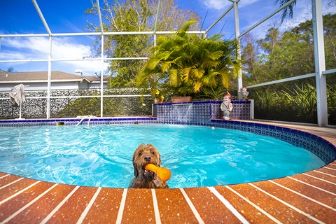 Pool Care with Pets